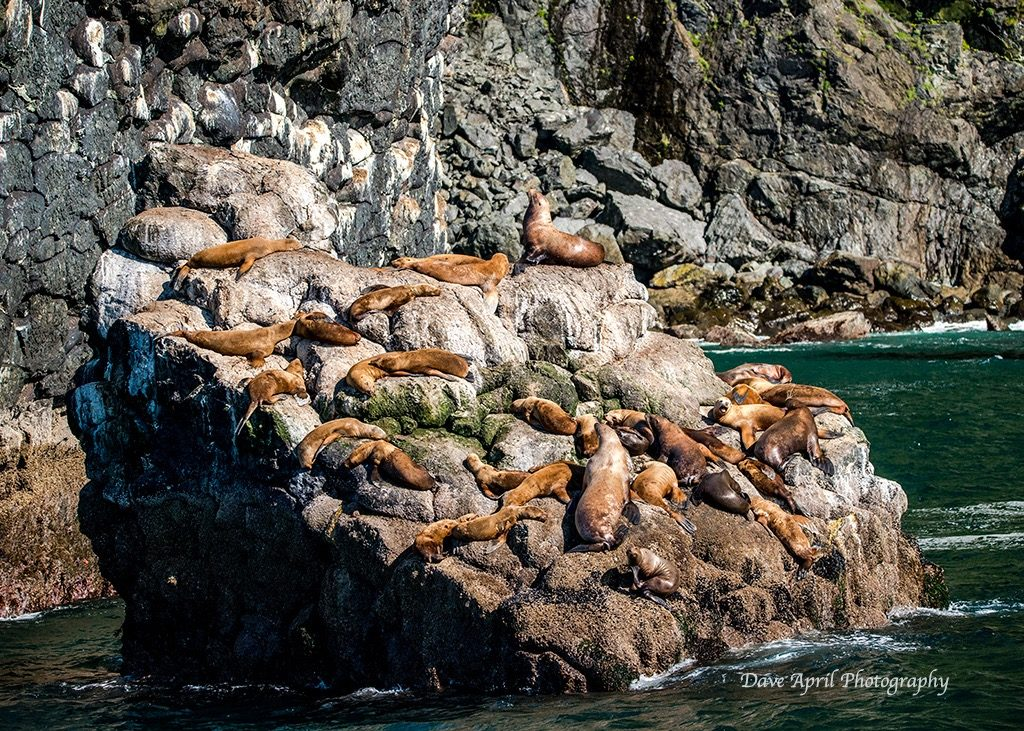 A Sea Lion Hangout!